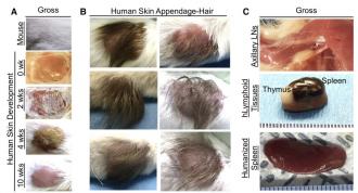 Οι επιστήμονες χρησιμοποιούν το τριχωτό της κεφαλής από εκτρωμένα μωρά για να δημιουργήσουν «εξανθρωποποιημένα ποντίκια» για «επιστημονική» έρευνα