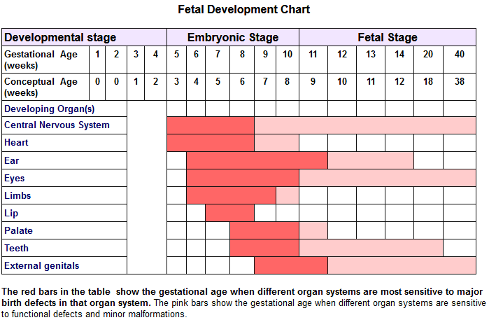 fetal development chart 01